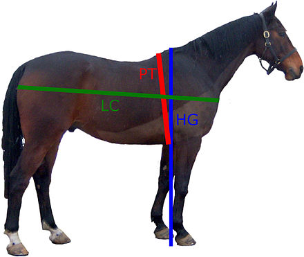 Comment faire perdre du poids a son cheval